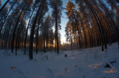 33c 1月横向俄国温度ural冬天 阿尔卑斯包括房子场面小的雪瑞士冬天森林 图库摄影