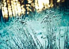 33c 1月横向俄国温度ural冬天 阿尔卑斯包括房子场面小的雪瑞士冬天森林 免版税库存图片