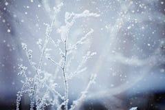 33c 1月横向俄国温度ural冬天 阿尔卑斯包括房子场面小的雪瑞士冬天森林 Frozenned植物 免版税图库摄影