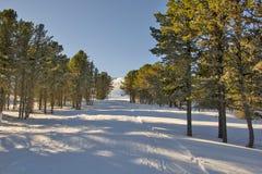 33c 1月横向俄国温度ural冬天 阿尔泰山全景 雪松 库存图片