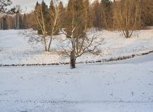 33c 1月横向俄国温度ural冬天 雪的冬天公园 库存图片