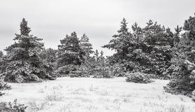 33c 1月横向俄国温度ural冬天 雪的森林 黑白图象 库存图片