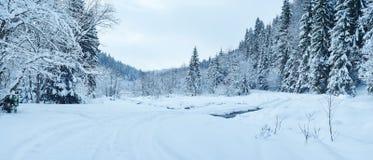 33c 1月横向俄国温度ural冬天 雪盖的冷淡的树 图库摄影