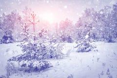 33c 1月横向俄国温度ural冬天 雪花在生动的日出的多雪的冬天森林里 在明亮的太阳光的不可思议的圣诞树 库存图片