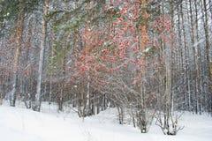 33c 1月横向俄国温度ural冬天 暴风雪 免版税库存图片