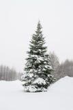 33c 1月横向俄国温度ural冬天 暴风雪 免版税库存照片