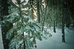 33c 1月横向俄国温度ural冬天 免版税图库摄影