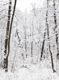 33c 1月横向俄国温度ural冬天 免版税库存照片
