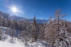 33c 1月横向俄国温度ural冬天 库存图片