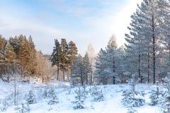 33c 1月横向俄国温度ural冬天 免版税库存图片