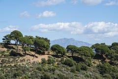 $c-andalusisch berglandschap met rollende heuvelsolijfgaarden en landbouwbedrijven onder een blauwe hemel in zuidelijk Spanje royalty-vrije stock afbeeldingen