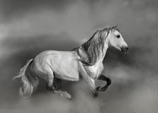 $c-andalusisch paard Stock Afbeeldingen