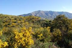 $c-andalusisch platteland, Spanje. royalty-vrije stock afbeelding