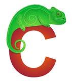 C for Chameleon Stock Images