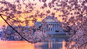 C.C. de Cherry Blossoms Washington imagem de stock royalty free