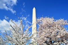 C.C. de Washignton, Colômbia, EUA - 11 de abril de 2015: As árvores de cereja na flor completa e em Washington Monument Imagens de Stock Royalty Free