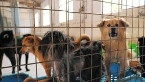 C?es tristes no abrigo que espera para ser salvado e adotado ? casa nova Abrigo para o conceito dos animais vídeos de arquivo