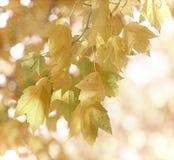 C'est automne Photos libres de droits