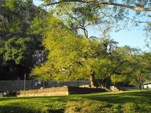 C'EST BELLE YAPAHUWA FORTERESSE DE ROCHE DE L'IMAGE DE SRI LANKA photo libre de droits