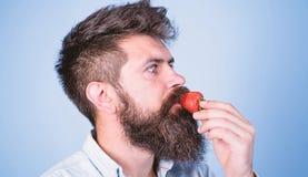 C'est comment ?t? de go?ts Casse-cro?te sain de fraise ?quipez le hippie beau avec la longue barbe mangeant la fraise Baies photos stock