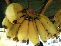 C'est l'image des fruits jaunes de banane qui accroche dans le groupe photographie stock