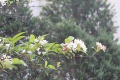 C'est la fleur blanche c'est fleur étonnante images libres de droits