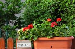 C'est-La konkurrieren Garten Stockbilder