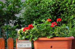 C'est la vie garden Stock Images