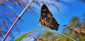 c'est mes photos et moment de favourit parce que le papillon non effrayant quand je prends de ma main image stock