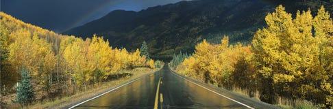 C'est million de route du dollar sous la pluie La route est foncée et humide Il y a des arbres de tremble avec des feuilles d'or  images libres de droits