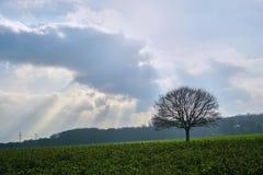 C'est un arbre un jour nuageux photo stock