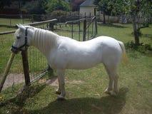 C'est un cheval image libre de droits