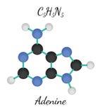 C5H5N5 adenine molecule Royalty Free Stock Photos