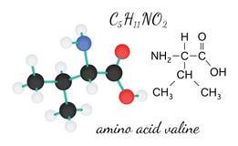 C5H11NO2 valine amino acid molecule Stock Images