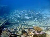 c-liggandepanna undervattens- w Royaltyfri Fotografi