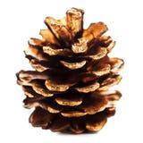 Cône d'or de pin de Noël d'isolement sur la fin blanche de fond  Images libres de droits