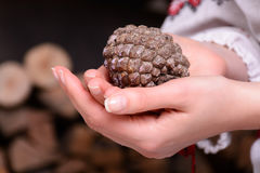 Cône de pin dans les mains d'une fille Bois de chauffage sur le fond Photographie stock libre de droits