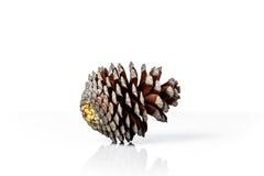 Cône de pin de Brown d'isolement sur le fond blanc Photographie stock libre de droits