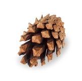 Cône simple de pin brun d'isolement sur le blanc Photo stock
