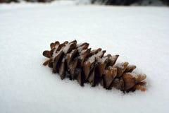 Cône solitaire simple de pin dans une pile de neige Photographie stock libre de droits