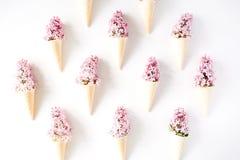 Cônes avec le lilas sur le fond blanc photographie stock libre de droits