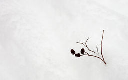 Cônes dans la neige Image libre de droits