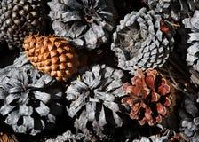 Cônes de pin au sol images libres de droits