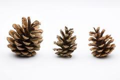 Cônes de pin d'isolement sur le blanc Image libre de droits