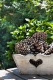 Cônes de pin dans un plateau Images stock