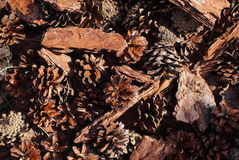 Cônes de pin et fond d'écorce Photos libres de droits
