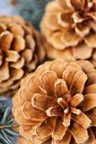 Cônes de pin et plan rapproché de macro de sapin Photographie stock