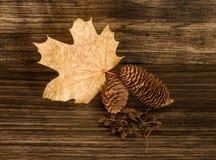 Cônes de pin, feuille et cônes secs d'aulne Photo libre de droits