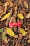 cônes et arc rouge image stock