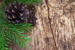 Cônes et brindilles des arbres Image stock